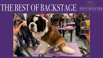 Relive Flynn the Bichon Frise's 2018 Westminster Kennel Club